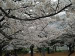 写真 2013-03-25 13 37 21.jpg