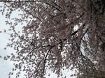 写真 2013-03-25 13 37 37.jpg
